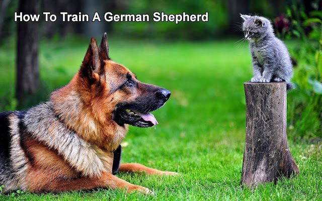 How To Train A German Shepherd    15 Lovely Reasons Why German Shepherds Make The Best Pets Ever    http://www.germanshepherdfacts.us