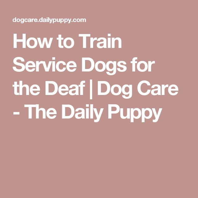 How to Train Service Dogs for the Deaf | Dog Care - The Daily Puppy