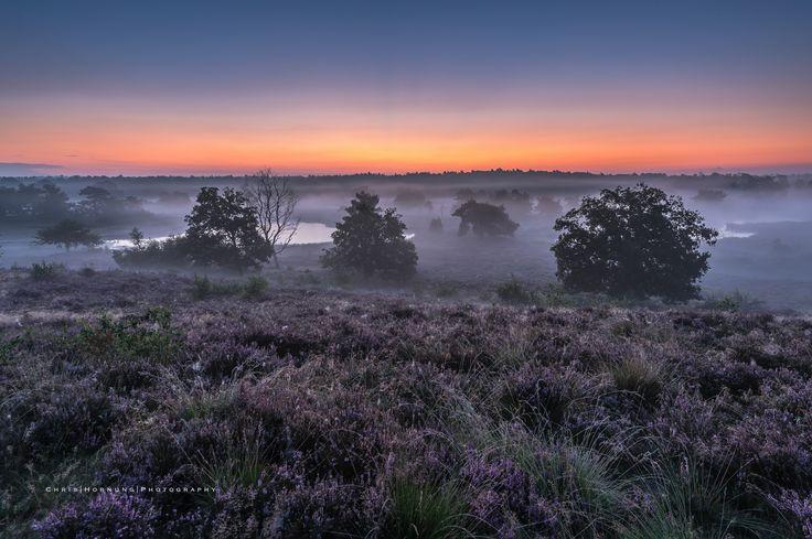 'before sunrise Maasduinen' - A beautiful sunrise at the National Park Maasduinen near Afferden, North Limburg.