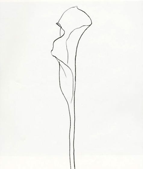 Ellsworth Kelly: Plant Drawings