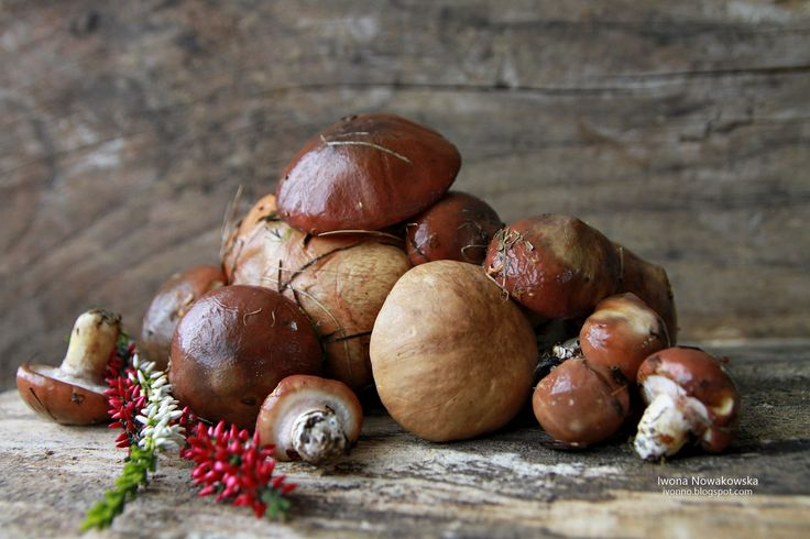 Mushrooms from the garden