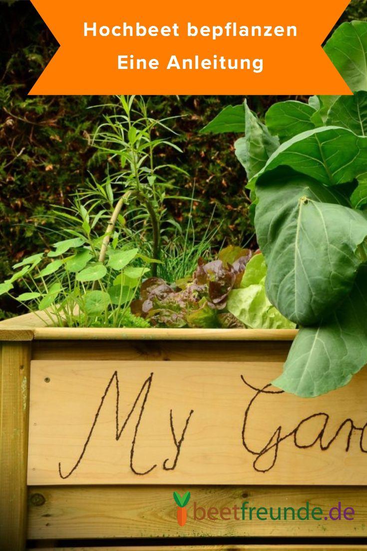Hochbeet Bepflanzen Gemuse Und Krauter Im Hochbeet Anbauen Hochbeet Bepflanzen Hochbeet Pflanzen
