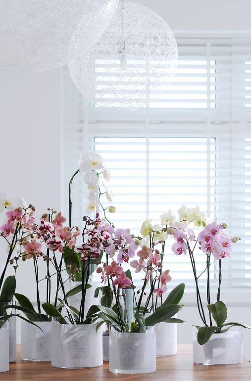 orchids gorgeous: Decor, Home And Gardens, Favorite Flowers, Flowers Pl, Favorite Things, Orchids Gardens, House, Orquidea En Casa, Beautiful Image
