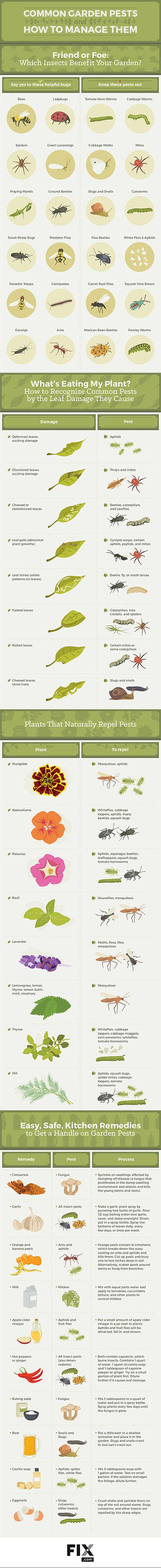We show you how to protect your garden from annoying pests. There are many…