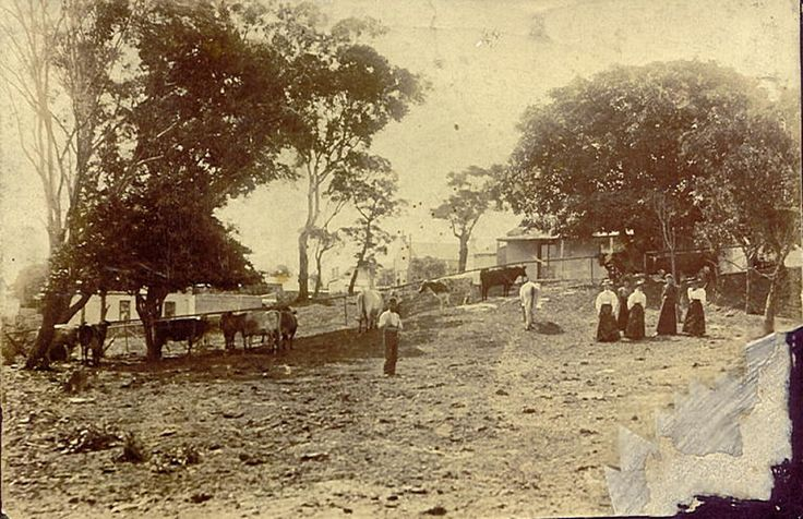 Dairy at the corner of Carrington Rd and Ruby St,Marrickville in inner Sydney in 1899.