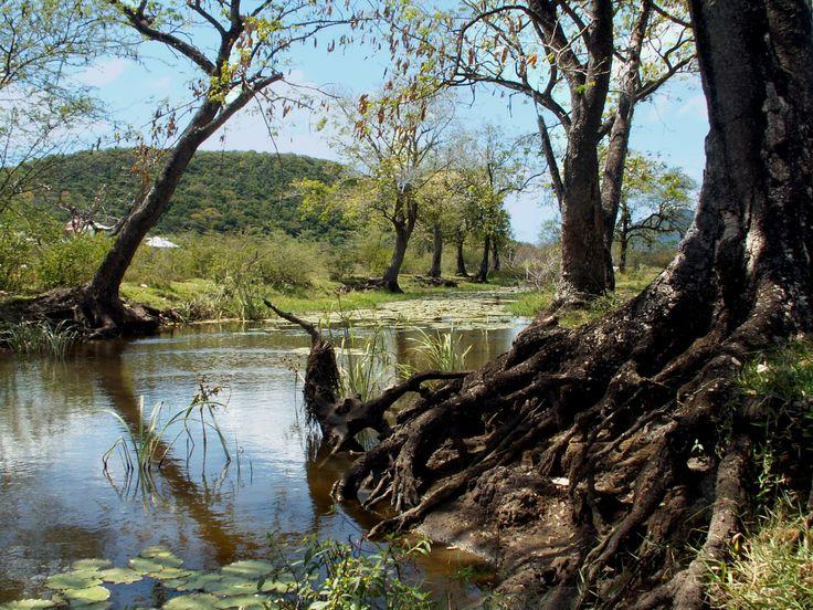 #Parc #Naturel de #Martinique  #zonehumide #mangrove  http://pnr-martinique.com/actualites/journee-mondiale-zones-humides/