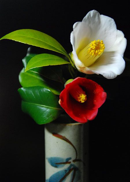 """Camelia. Saw these in Fruits Basket and wondered what they meant. """"The symmetrical beauty and long-lasting quality of the flower have long been appreciated by young lovers as the token for expressing devotion to each other... the petals reflect the spirit of a lady, and the holder of the petals (the calyx) represents the young man..."""" The calyx falls with the petals when the flower finishes blooming, unlike most flowers. This symbolizes an everlasting union between lovers."""