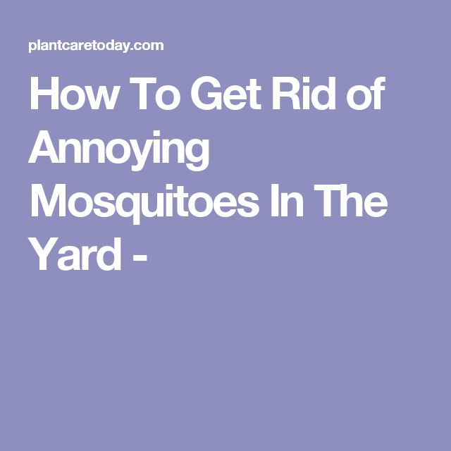 How To Get Rid of Annoying Mosquitoes In The Yard ...