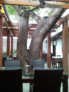 Under the Mango Tree - Bangalore