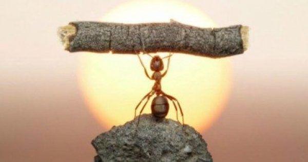 Τι να Κάνετε από Τώρα για να μην Πλησιάζουν τα Μυρμήγκια στο Σπίτι σας