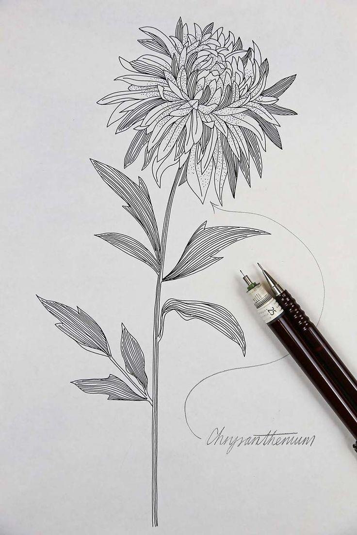 Chrysanthemum Flower Dre illustration Jitesh Patel
