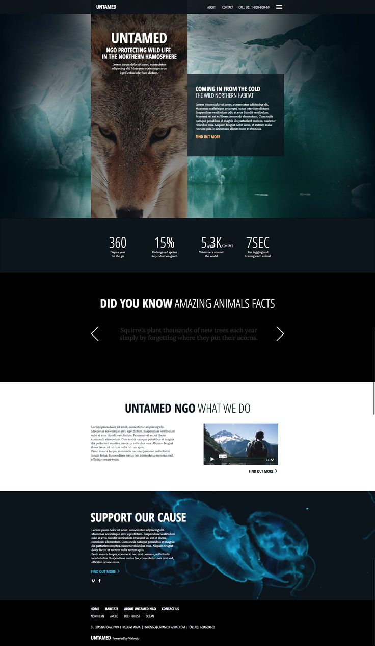 11 best website templates by webydo images on pinterest big images with great use of space to carry across beauty and precision template website buildersfreelance pronofoot35fo Image collections