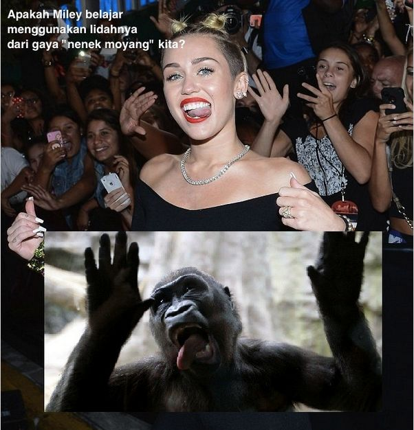 Apakah mungkin gaya Miley dengan lidahnya belajar dari teman kita ini