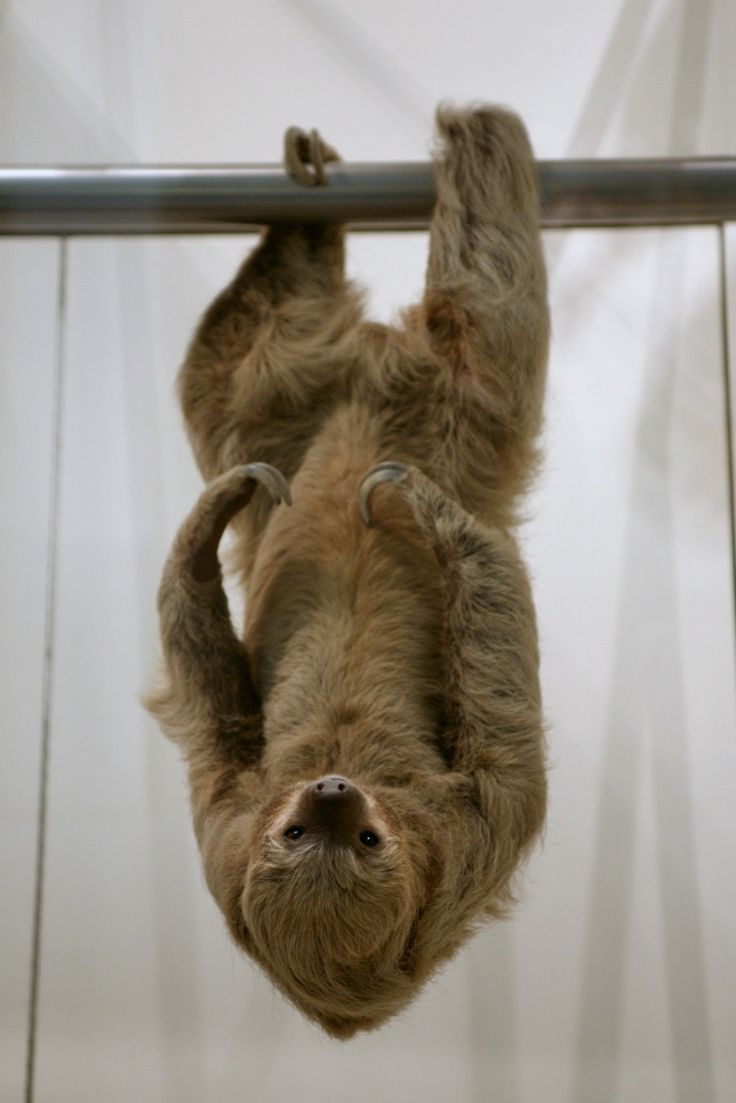 Sloth going to the bathroom - 10 Sloths Who Deserve A Snazzy Makeover
