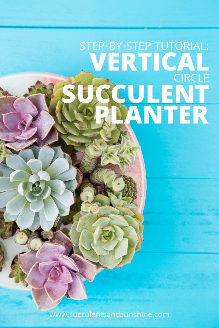 Planting A Vertical Circle Succulent Planter By Dalla Vita