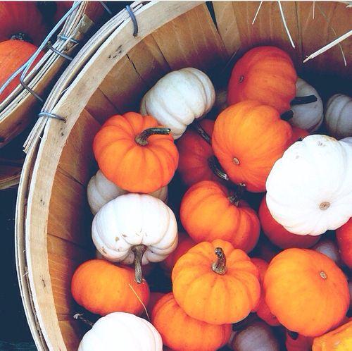 infrared nike socks pumpkins in a basket