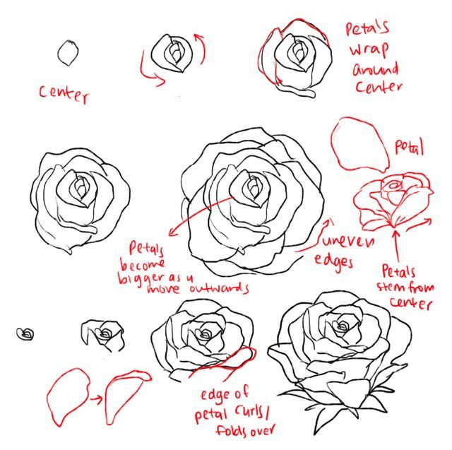 How to draw roses and peonies - Imgur | Drawing ...