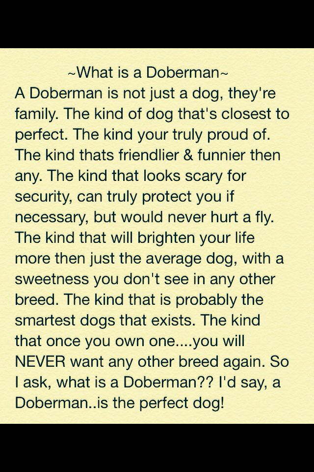 """What is a Doberman"" Written by Maureen Pelczarski  *Love the message, but not a fan of the writing errors.*"