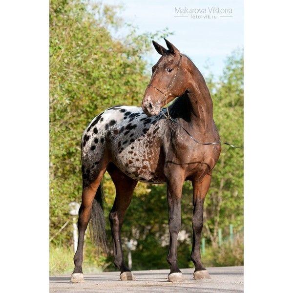 die besten 25 seltene pferdefarben ideen auf pinterest h bsche pferde blaues stichelhaariges. Black Bedroom Furniture Sets. Home Design Ideas