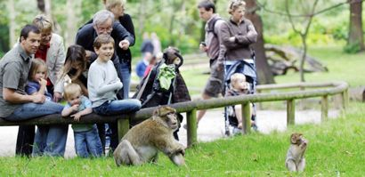 Monkey Forest at Trentham in Staffordshire.  We can't wait to try this place!