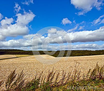 Scenic view of afield of stubble  in the countryside with a blue sky and clouds