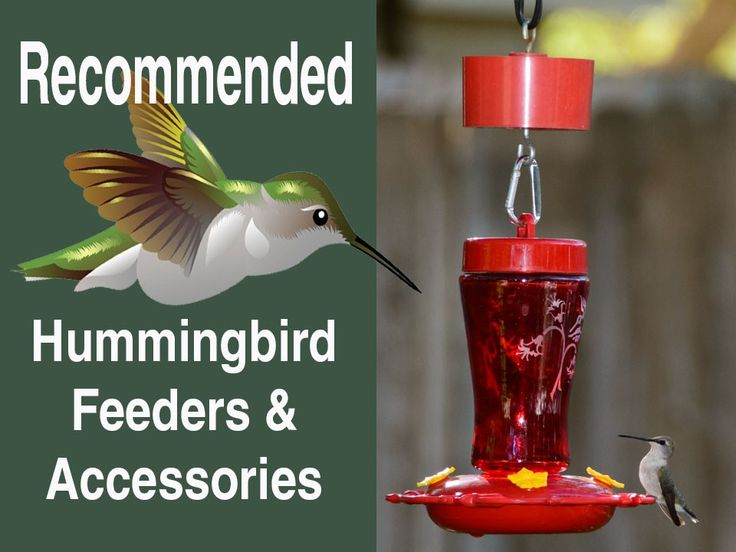 Recommended Hummingbird Feeders & Accessories