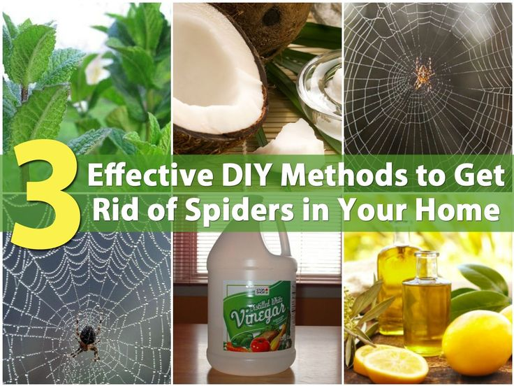 3 effective diy methods to get rid of spiders in your home for How to get spiders out of your house