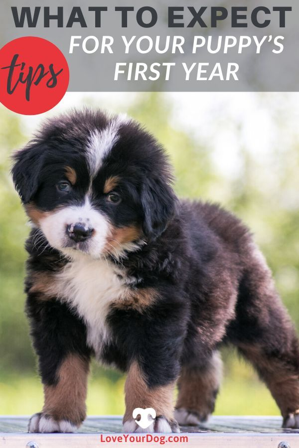 Your Puppy S First Year What To Expect Shots Vet Visits More In 2020 Puppies Training Your Dog Dog Care