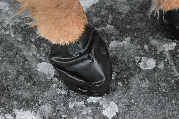 Pawz dog boots are waterproof and perfect for winter conditions. Protect those paws from ice, salt and snow!
