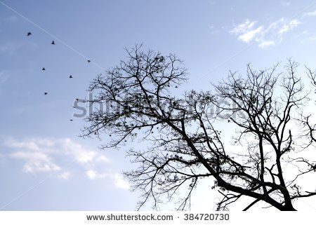Silhouette of birds flying away from tree with blue sky in the background.
