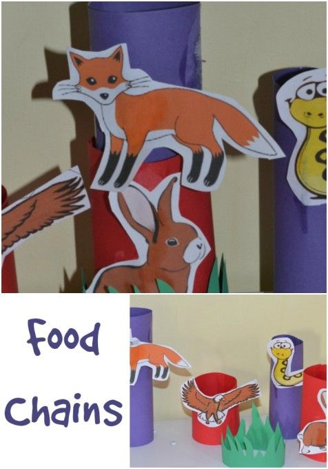 Paper Tube Food Chain Activity (from Science Sparks)