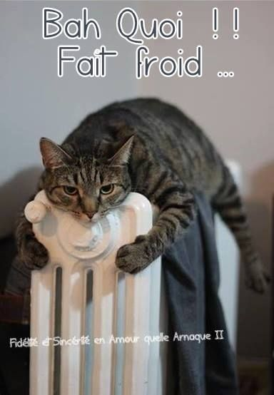 Bah Quoi !! Fait froid #froid chats radiateur chaud hiver drole humour