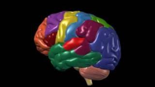 Brain Anatomy and Functions, via YouTube.