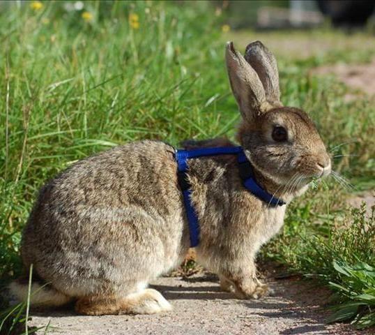 Lär din kanin att komma på inkallning - Bur och aktivering - Kanin iFokus