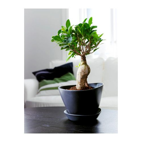 bigarr plant pot with saucer ikea drainage hole in the bottom of the plant pot allows excess. Black Bedroom Furniture Sets. Home Design Ideas