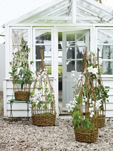 Sweet Pea Frames made of willow - by Cox & Co - love these! great planters for any climber - I need to plant some willows so I can get cuttings ... :)  #willow #planter #basket #frame #climber #vine #trellis #garden #gardening tå√