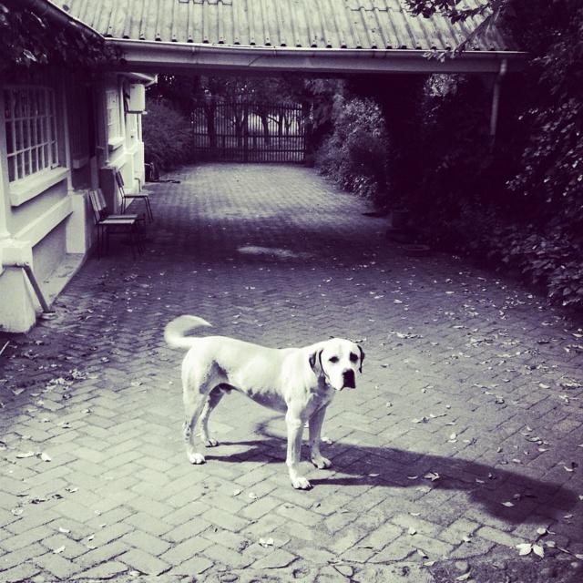 Farm canine.