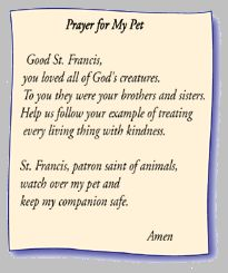 Prayer For Augie Heart Prayer For Sick Dog Sick Cat
