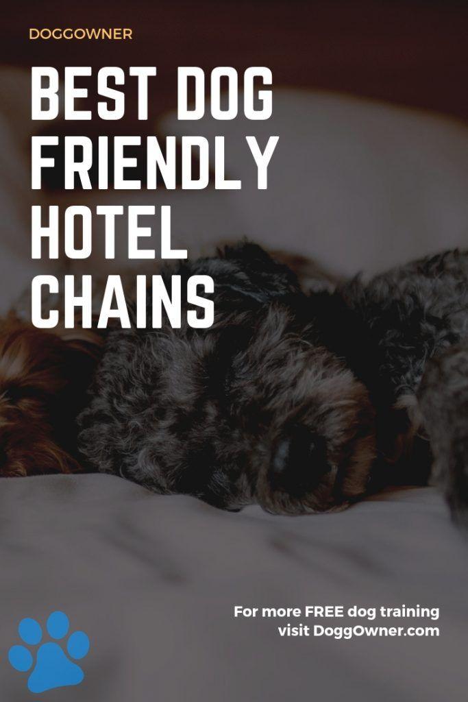 9 Best Dog Friendly Hotel Chains In 2020 Dog Friendly Hotels Dog Friends Dog List