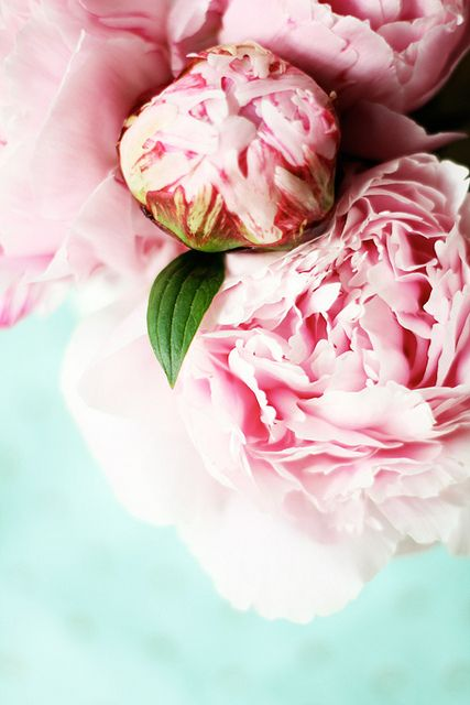 I do believe peonies are my new favorite flower. Pass it on.