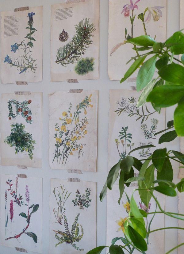 Déco botanique
