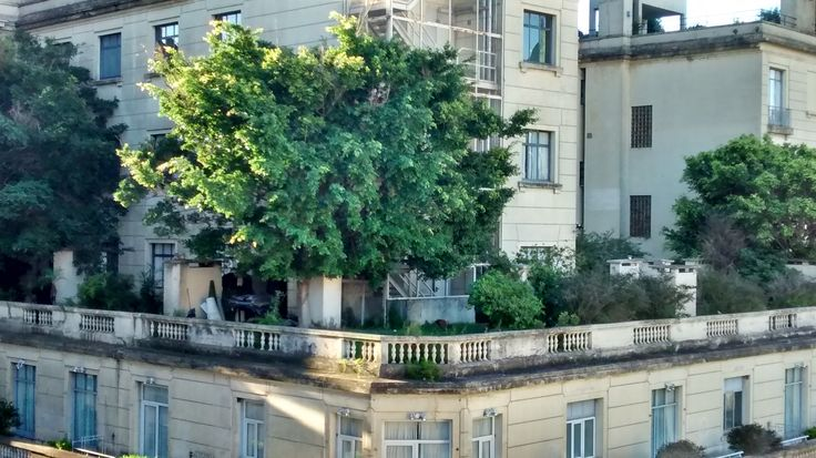 Terraza jardin hotel plaza