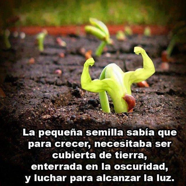 La pequeña semilla sabía que para crecer, necesitaba ser cubierta de tierra, enterrada en la oscuridad y luchar para alcanzar la luz