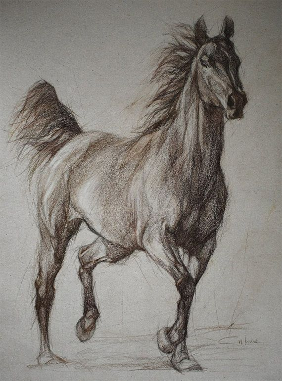 Wild Horses Tattoo Pictures To Pin On Pinterest Dig Tattoos Picture