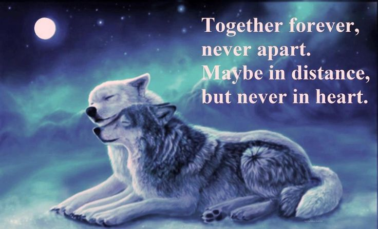 25+ Best Together Forever Quotes On Pinterest