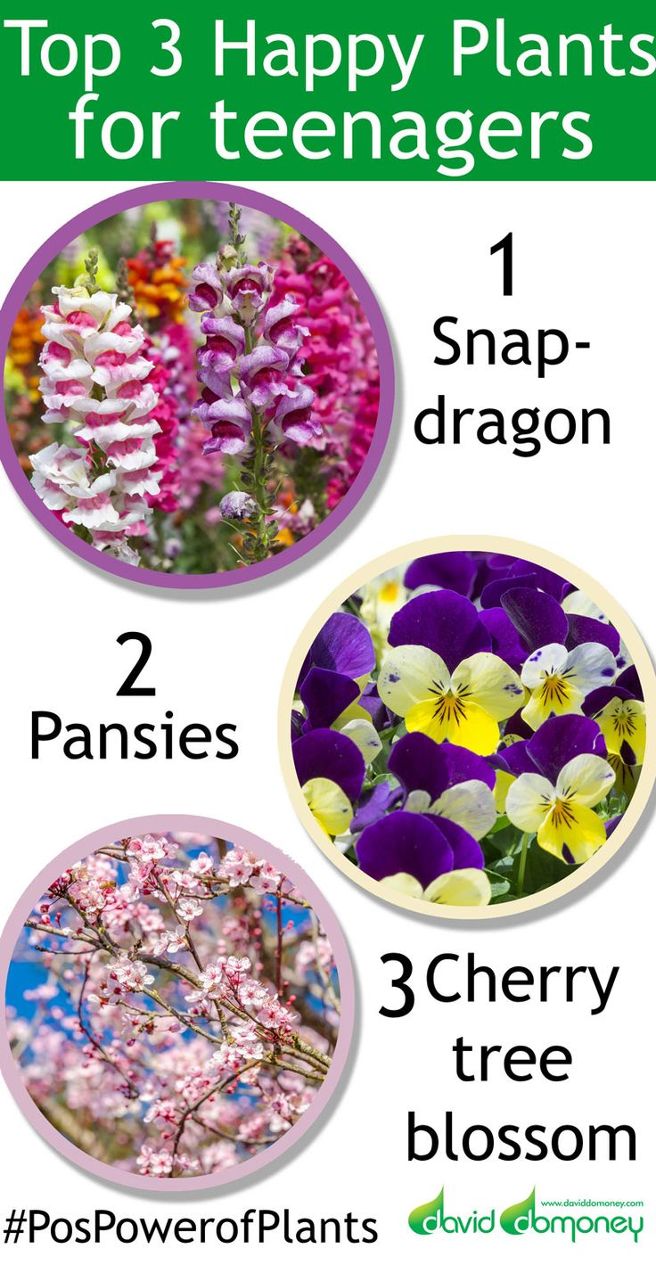 best 25 serenity garden ideas on pinterest water tolerant