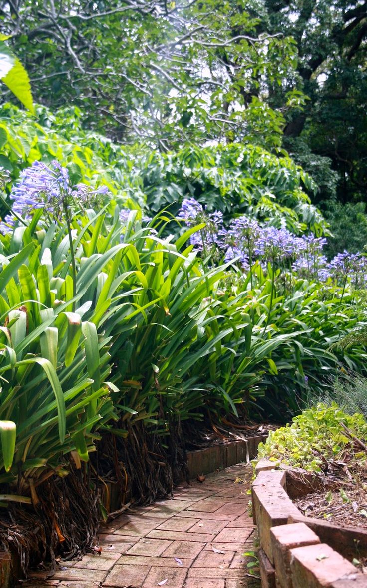 #365Toowoomba: Monday, January 13: Boyce Gardens