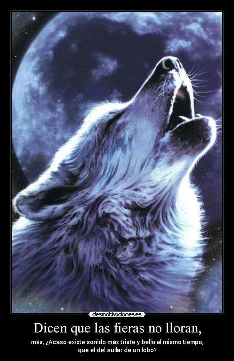 lobos con frases - Buscar con Google