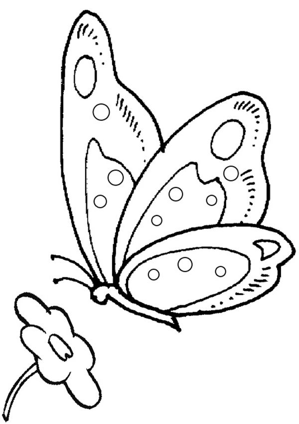 Free Online Butterfly Colouring Pages