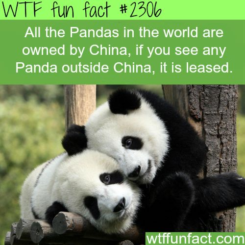 All Pandas are owned by China -WTF funfacts